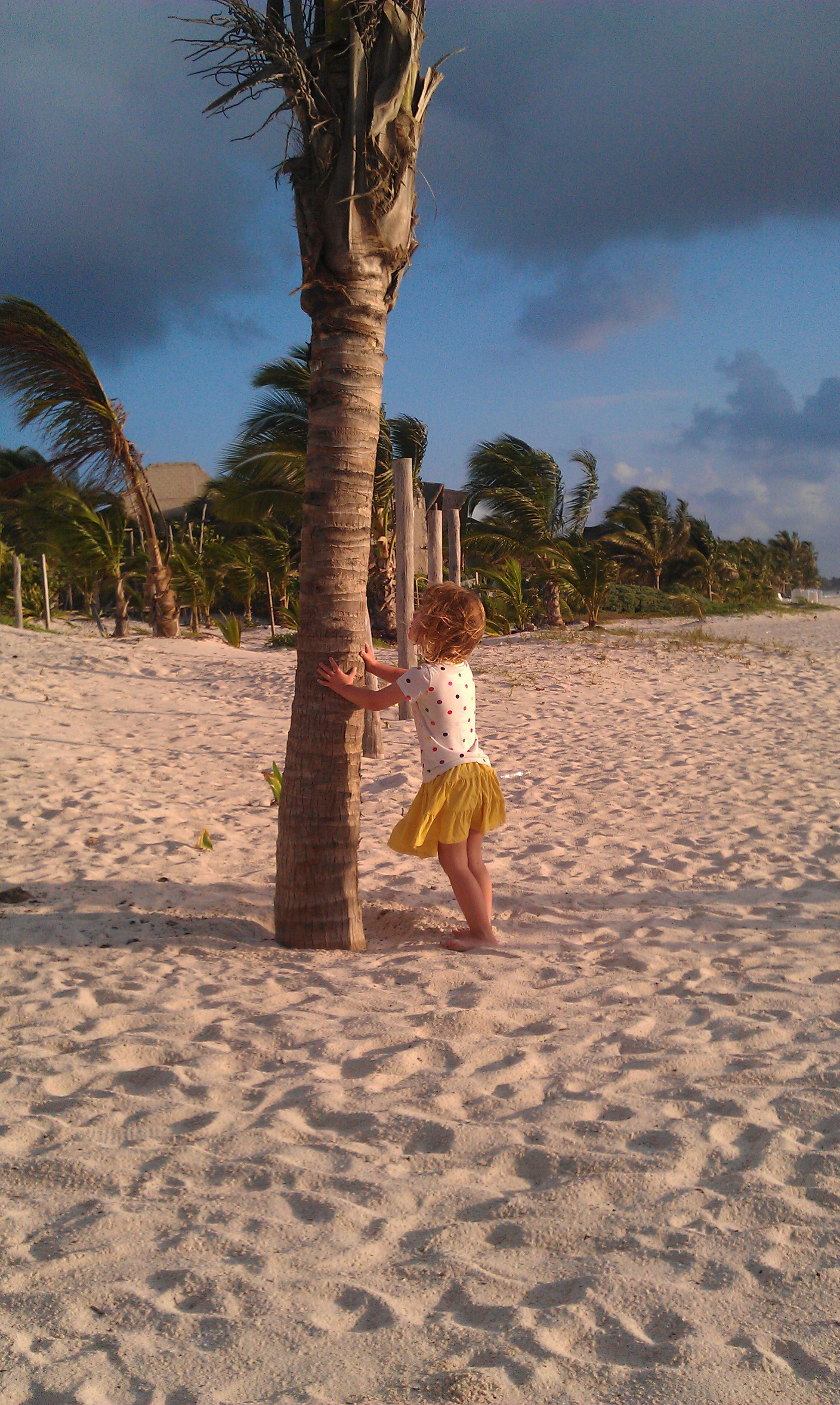 Our favorite activity: Shaking the coconut tree!